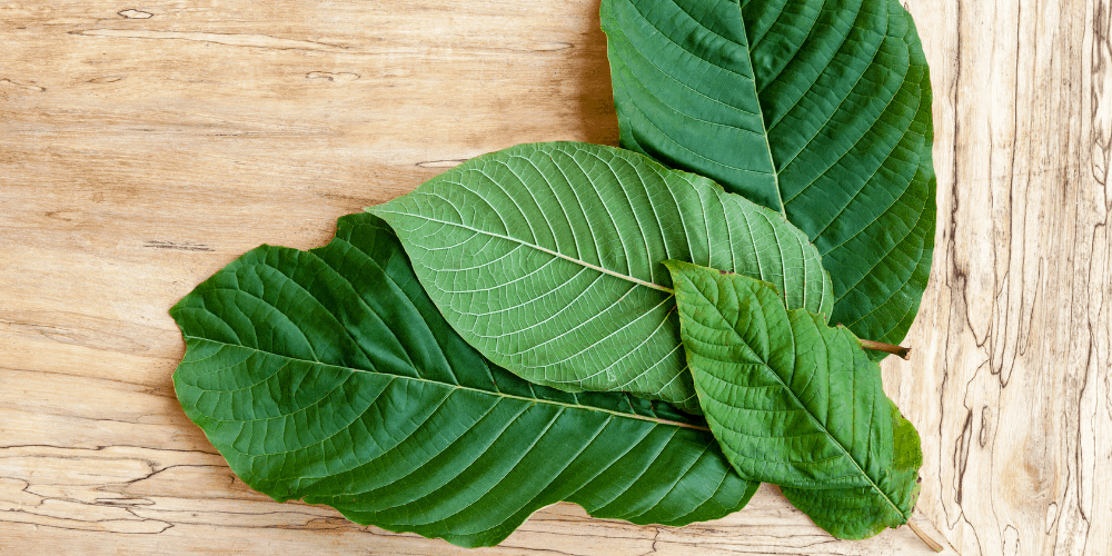 Maeng Da Kratom: Benefits, Effects, and Uses | Kratom Insider